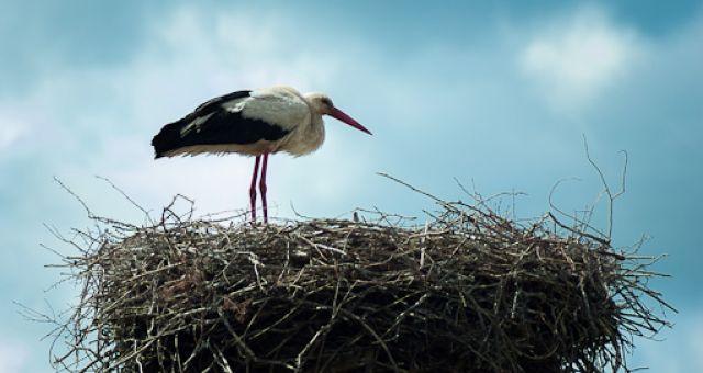 Storchen-Nest